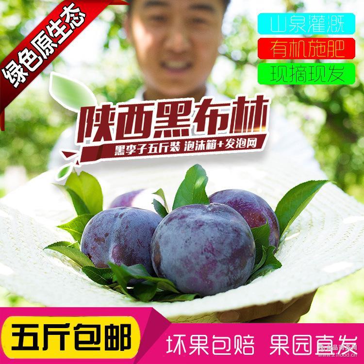 水果一件代发批发 新鲜李子现货包邮 陕西黑布林 非荔枝量大从优