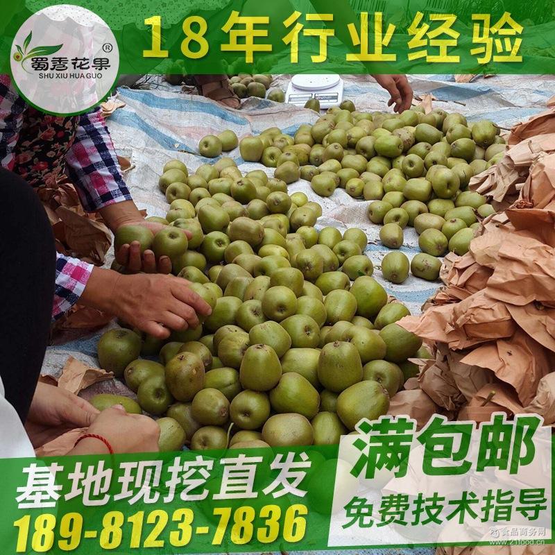 帮外地客商组织收购苍溪红心猕猴桃胜生鲜蔬果红阳猕猴桃中大果