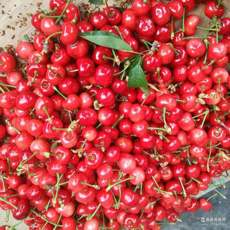 欢迎预定【图】 新鲜水果 烟台大樱桃 预售樱桃 5月现摘现发