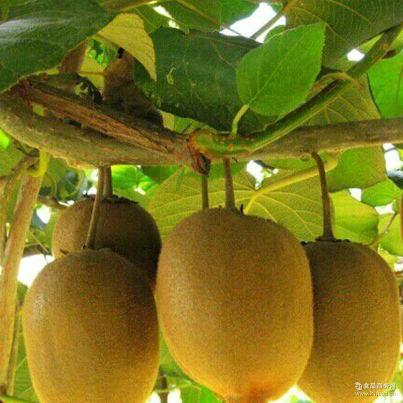 宝鸡秦美香猕猴桃绿心大果奇异果绿果新鲜水果一斤