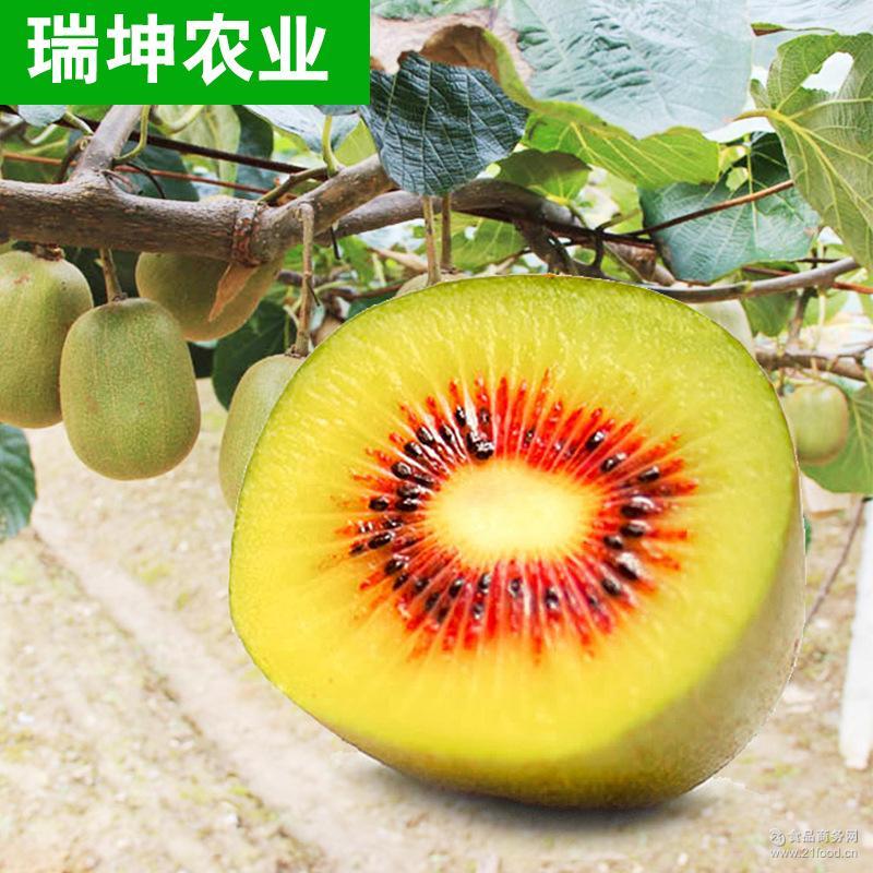 产地直销 蒲江特产猕猴桃 红心猕猴桃新鲜水果红心猕猴桃