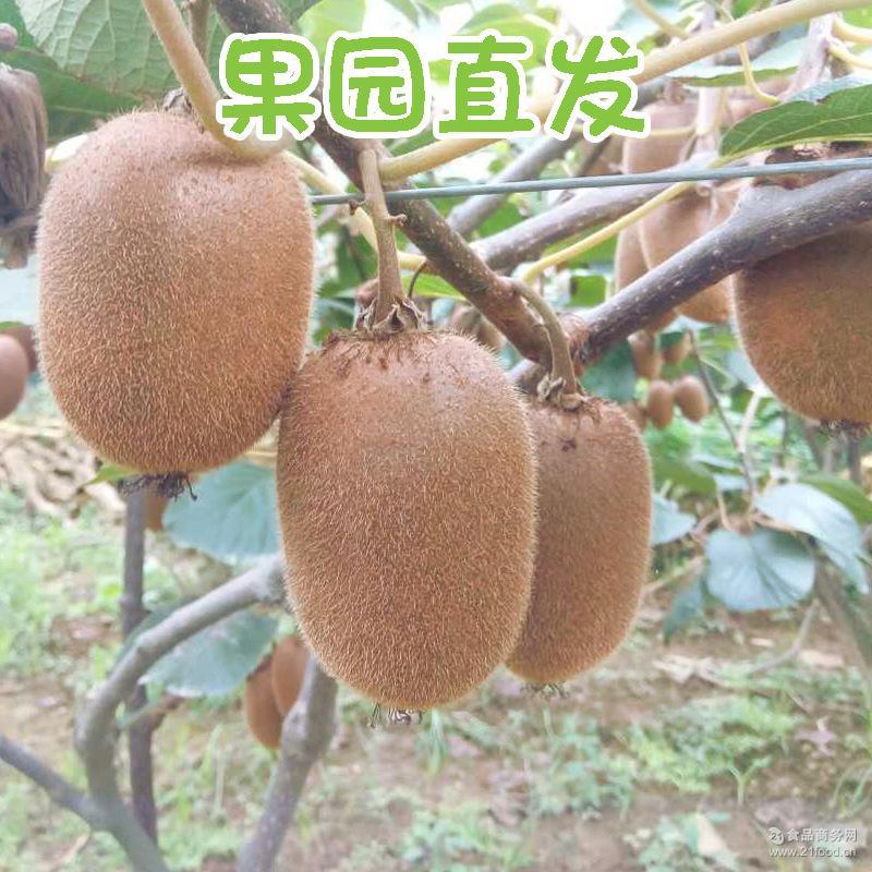 周至产地直发翠香猕猴桃新鲜奇异果水果口感香甜可口弥猴桃包邮