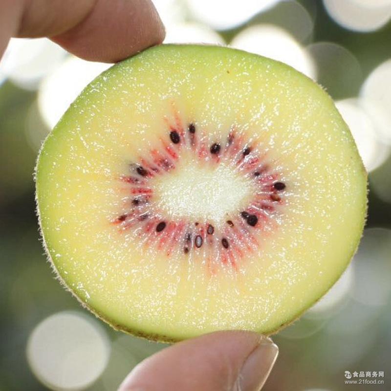 预售批发四川红心猕猴桃6粒试吃装1斤特色水果现摘现发