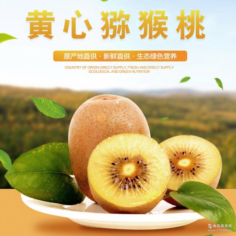 果园新鲜采摘红心猕猴桃量大从优 预售 四川蒲江黄心猕猴桃奇异果