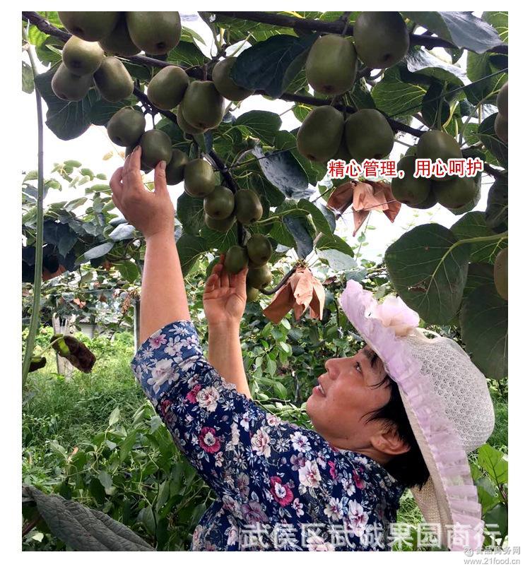 自家果园现摘现发 预售四川都江堰红心猕猴桃单果重80-100克