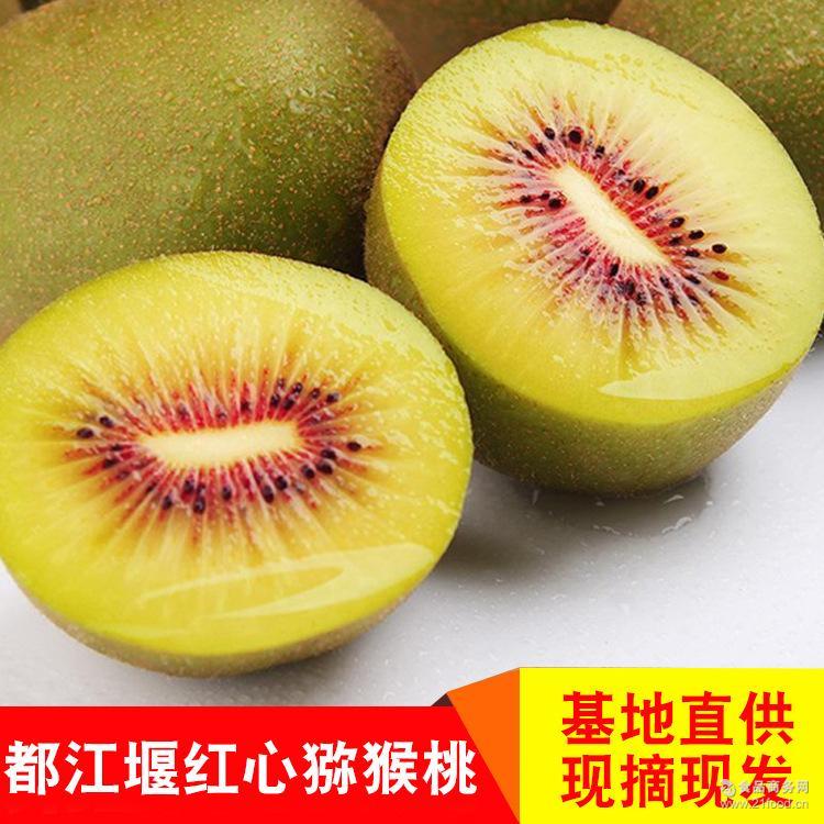 四川都江堰红心猕猴桃非蒲江猕猴桃新鲜水果现摘现发批发零售