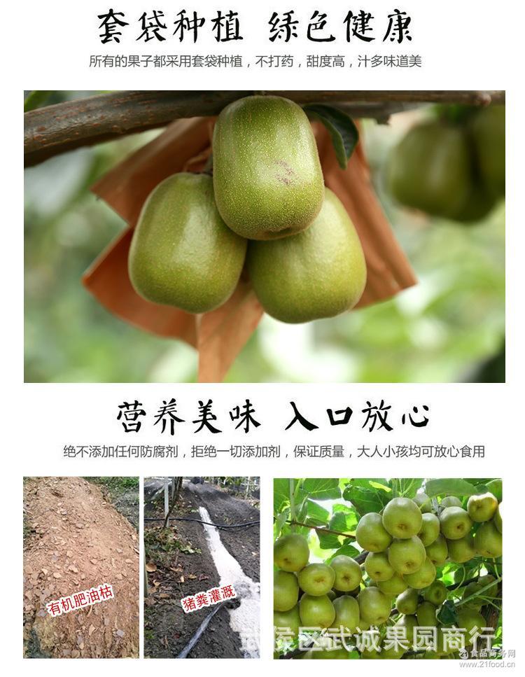 红心猕猴桃2_05