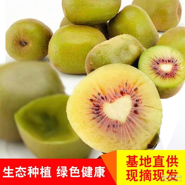 新鲜水果现摘现发产地直供支持一件代发 四川都江堰红阳猕猴桃