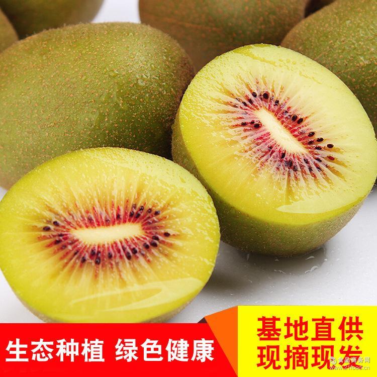 四川都江堰红心猕猴桃非蒲江猕猴桃 产地直供新鲜水果批发零售