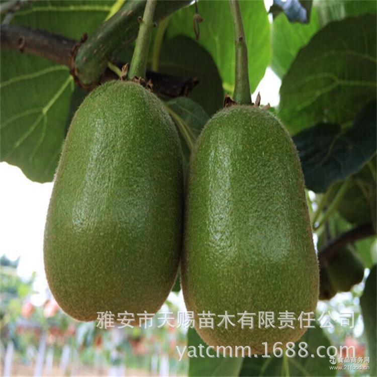 基地批发正宗深山红心果猕猴桃鲜果奇异果无公害精品特级新鲜水果