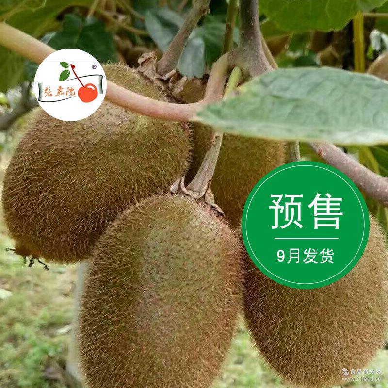 新鲜预售9月发货陕西眉县徐香猕猴桃5斤装