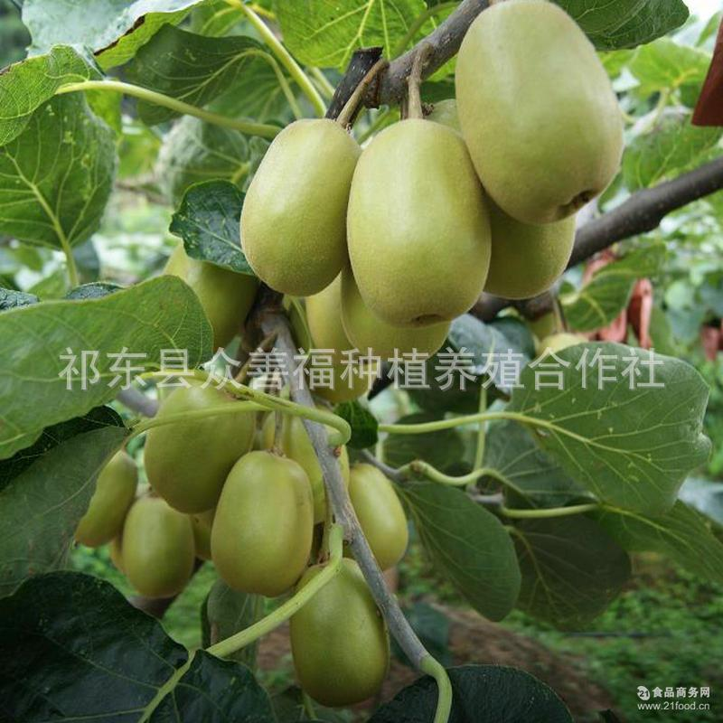 批发果正宗红心猕猴桃 营养果汁猕猴桃 农村特产量大优惠