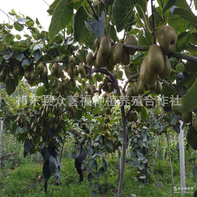 赠品红心猕猴桃新鲜水果孕妇水果奇异果乐园猕