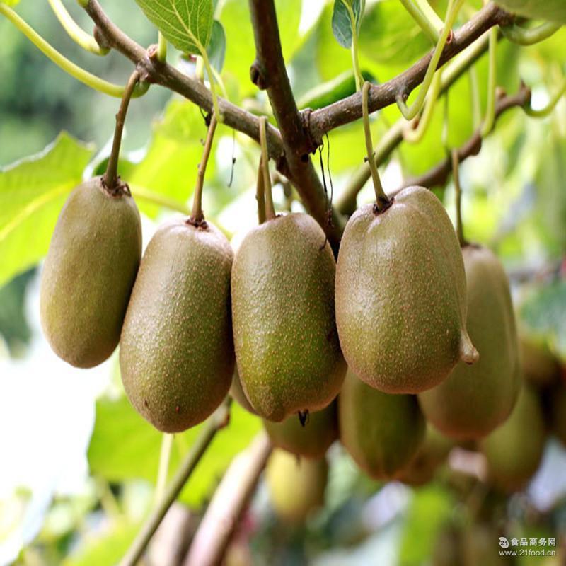 新鲜水果 生态奇异果18个包邮一 田园绿心猕猴桃