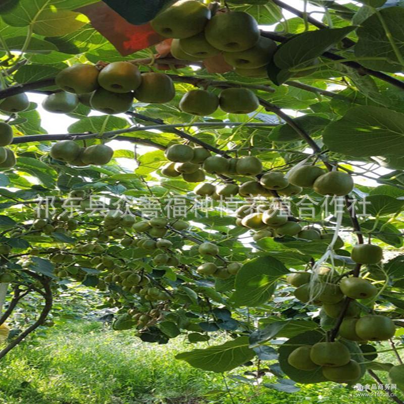 鲜菓篮 预售湖南衡阳红心猕猴桃30枚 甜心猕猴桃奇