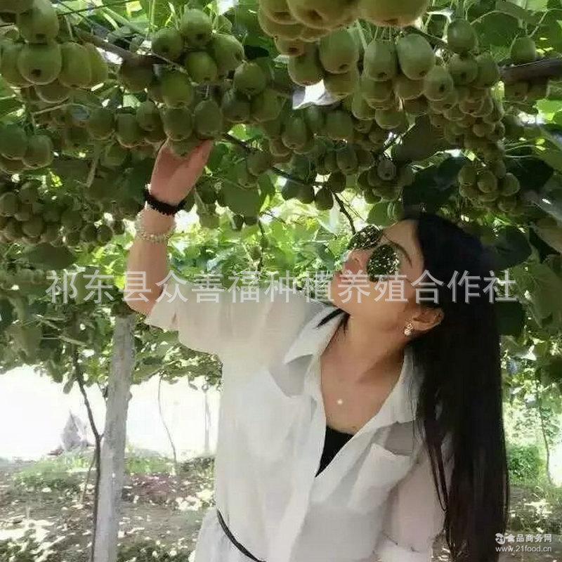 原生态新鲜奇异果猕猴桃 新鲜水果 湖南衡阳红心猕猴桃