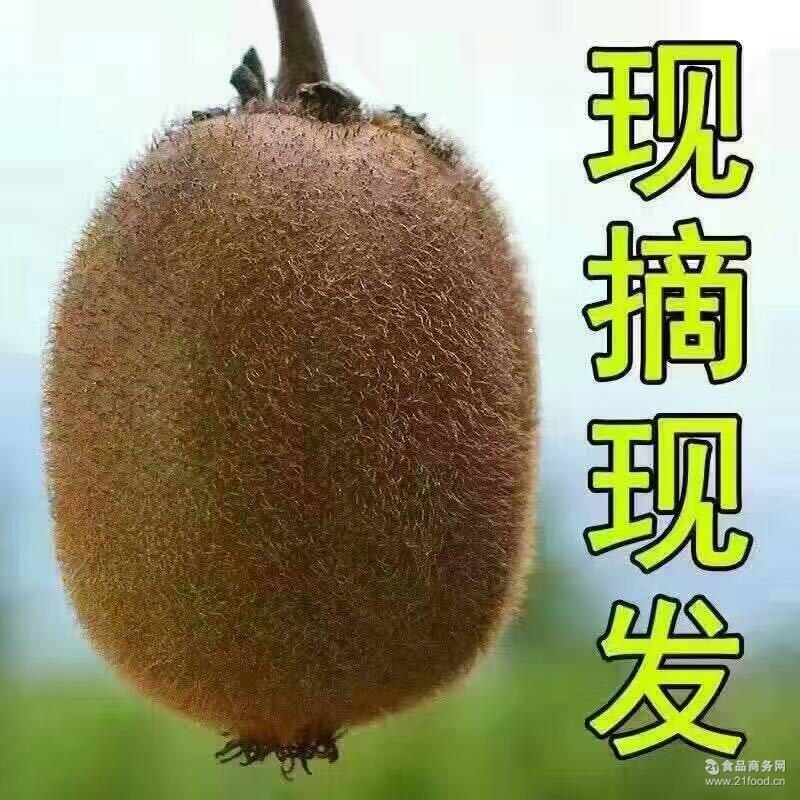 正宗眉县徐香猕猴桃新鲜水果现摘现发批发销售