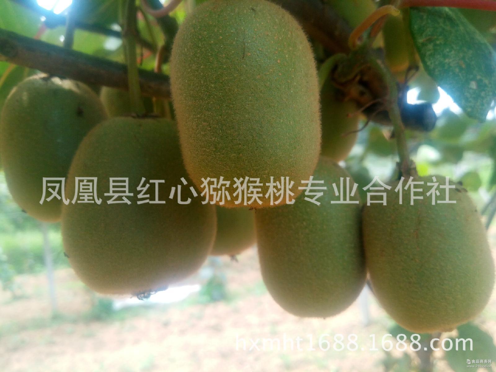 农场直供凤凰特产富硒金燕猕猴桃