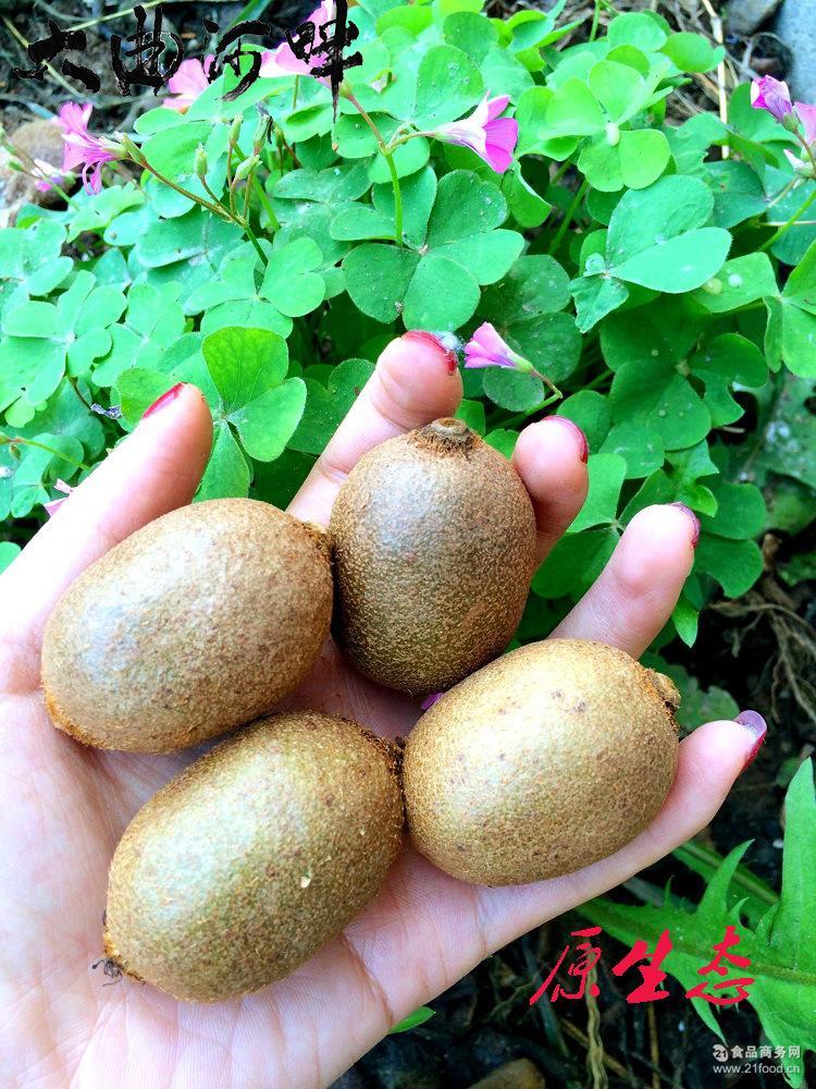 野生周至奇异果天然猕猴桃新鲜水果原生甜香奇异果原味5斤包邮(全