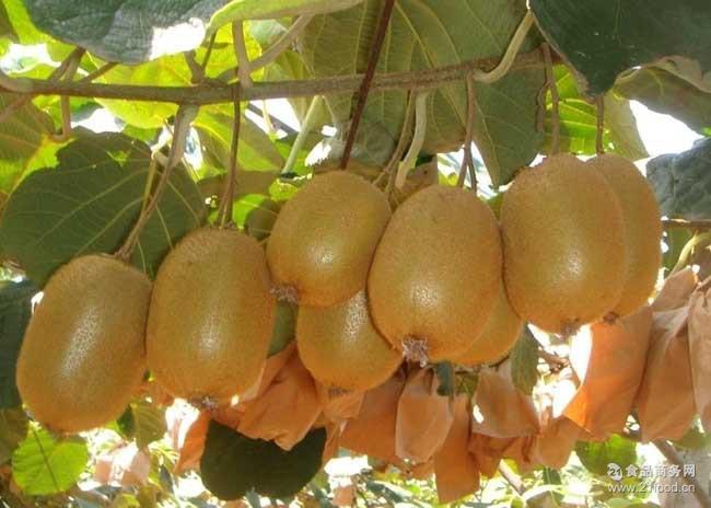 批发包邮8斤装当季绿心新鲜孕妇水果 产地直供周至徐香猕猴桃