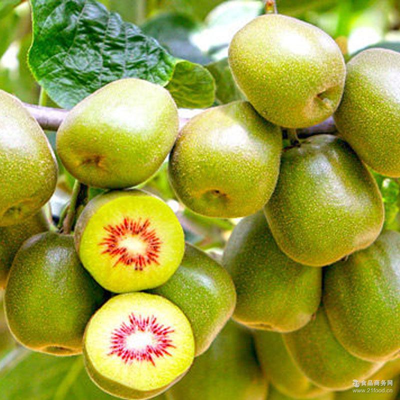 5斤装水果批发 新鲜水果批发 红心猕猴桃产地直发