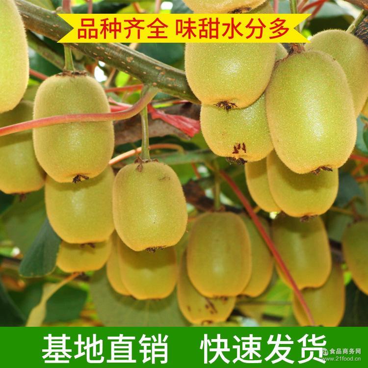猕猴桃 奇异果