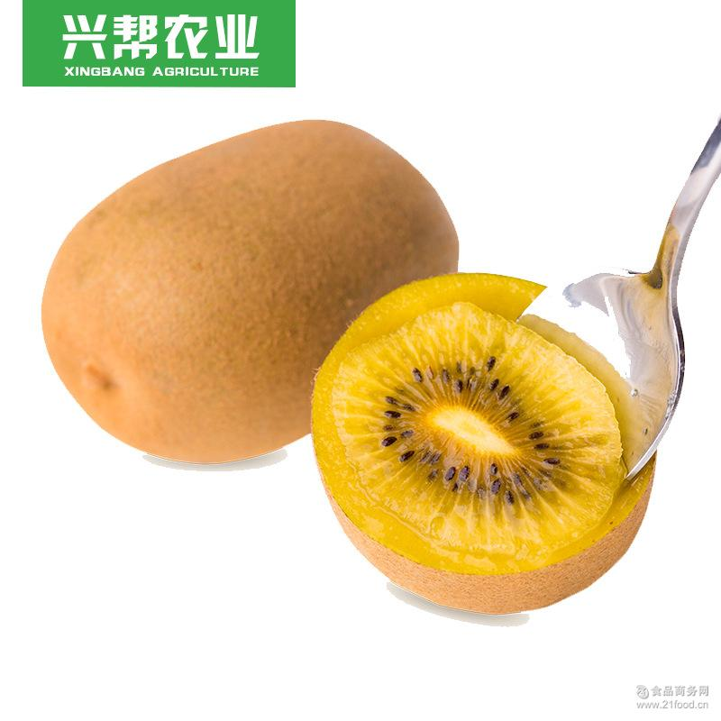水果代发新鲜现摘 四川蒲江黄心猕猴桃 厂家直销 应季批发预售款