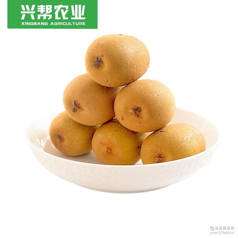 水果代发新鲜现摘 应季批发预售款 四川蒲江黄心猕猴桃 一件代发