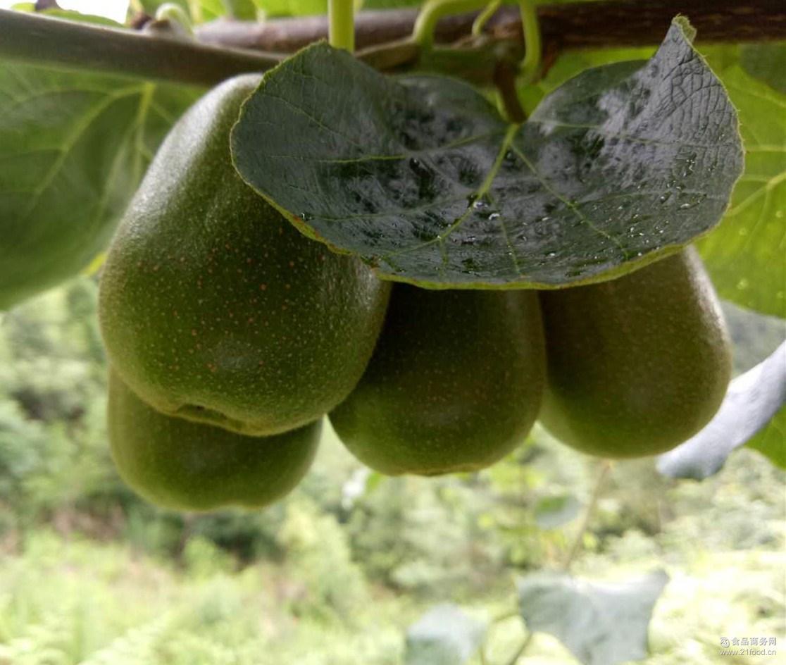 江山徐香猕猴桃 农场直销 现摘新鲜水果盒装奇异果2.5kg5kg