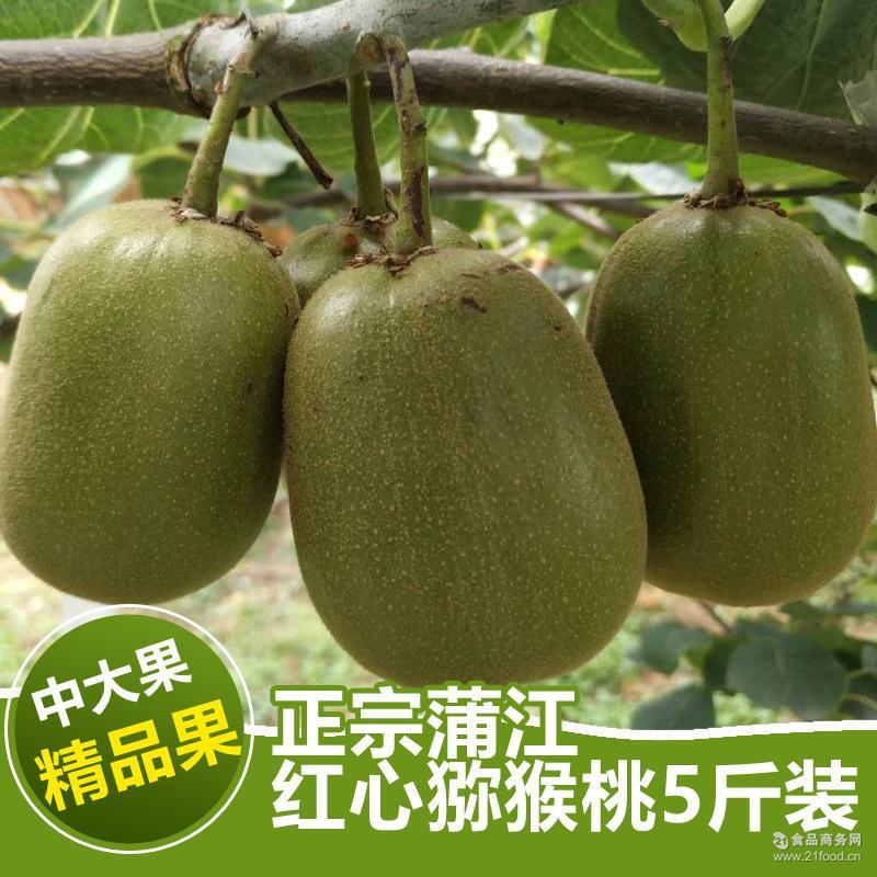 新鲜水果 正宗蒲江 红心猕猴桃5斤装 预售 奇异果产地批发包邮