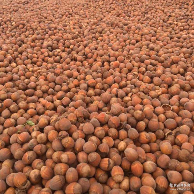 厂家批发东北特产榛子 原味榛子饱满清香坚果炒货类食品美味榛子