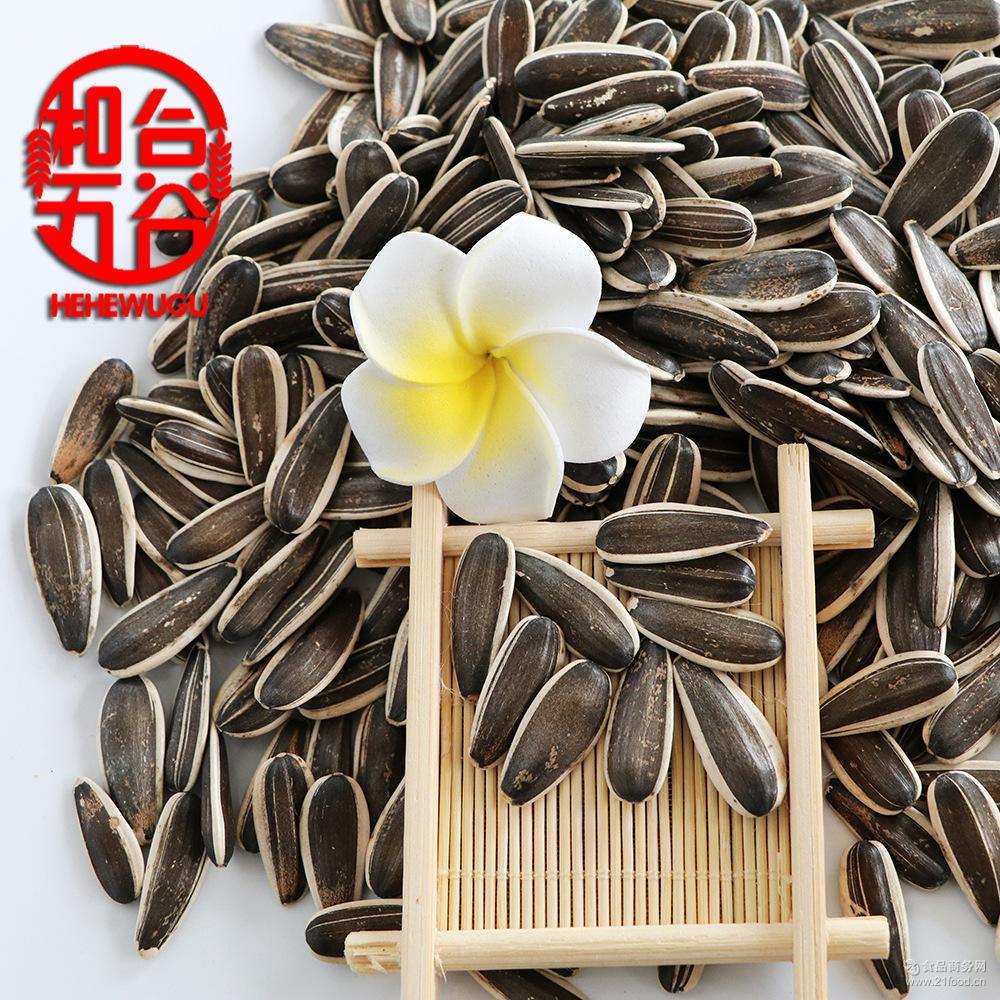 瓜子363生葵花籽 毛嗑 内蒙古优质产品 葵花籽 原产地直销