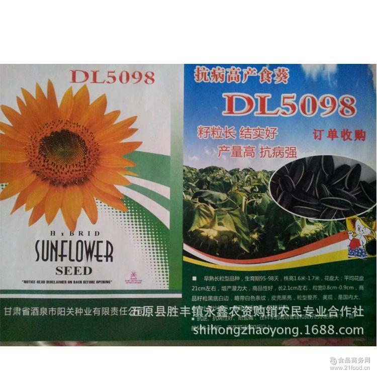 DL5098【网上热卖】 杂交食用葵花种子 内蒙古优质 供应