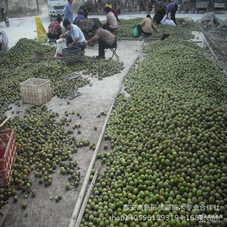 薄壳青皮核桃价格 山东青皮核桃供应 带青皮的核桃 核桃鲜果