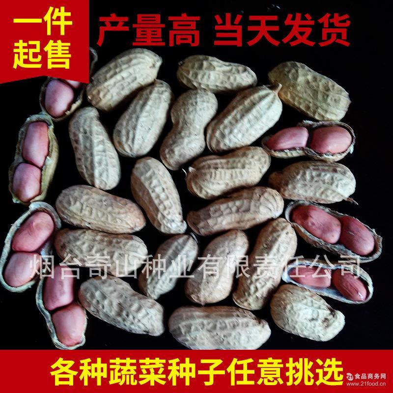 农产品种子 小粒白沙花生芽苗菜种子 小饱满颜色鲜艳花生种子粒