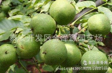 山东泰安青纸皮核桃价格 青皮核桃 2017山东青皮鲜核桃价格