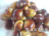 菜栗原料 出口板栗 供应生鲜板栗仁 鲜板栗 炒栗原料