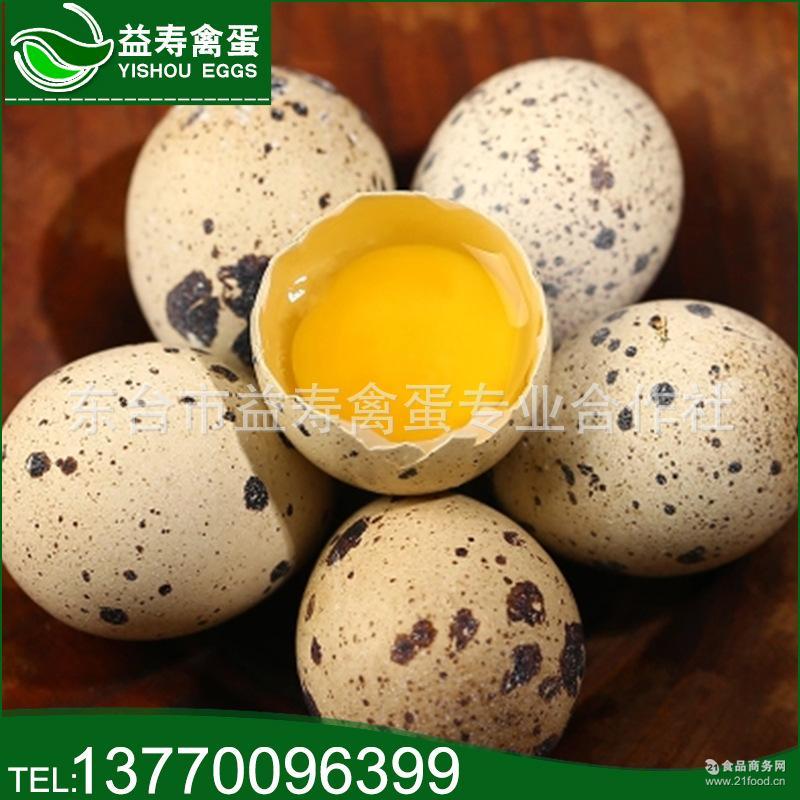 批发正宗农家散养原生态无激素 美味宝宝辅食 新鲜生鹌鹑蛋