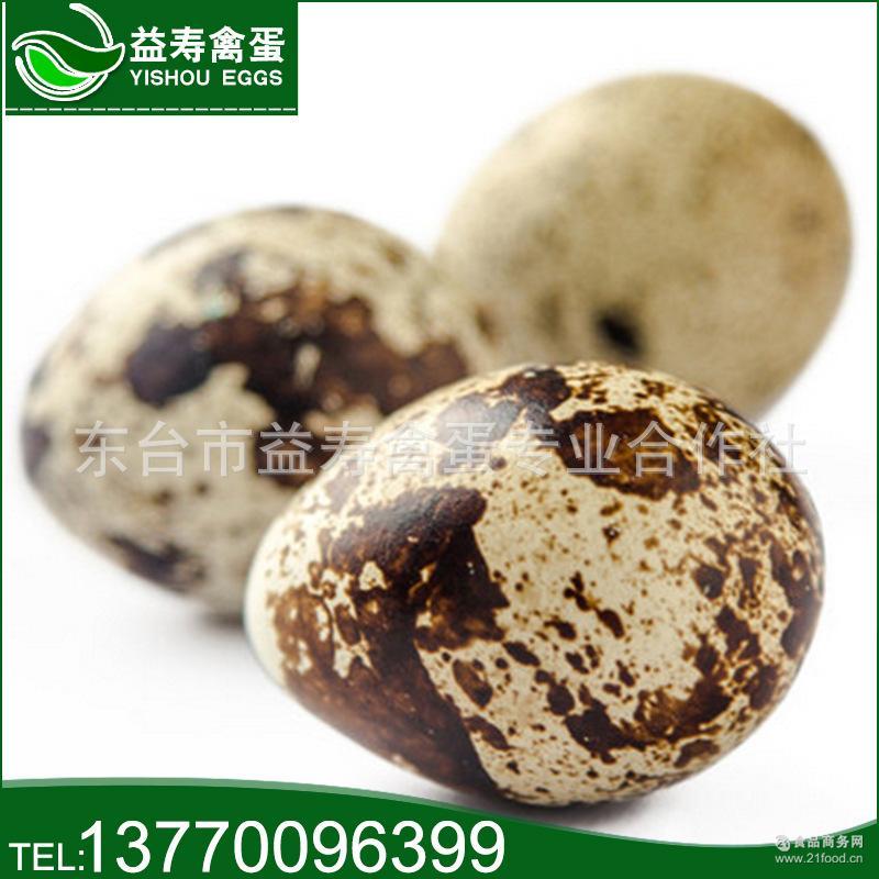 批发特惠食用农产品直营新鲜生鹌鹑蛋优质