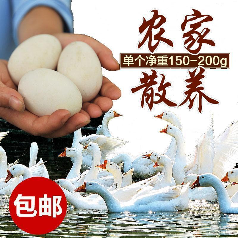 水库农家放养土鹅蛋产后妈妈需要高营养新鲜初生土鹅蛋 一件代发