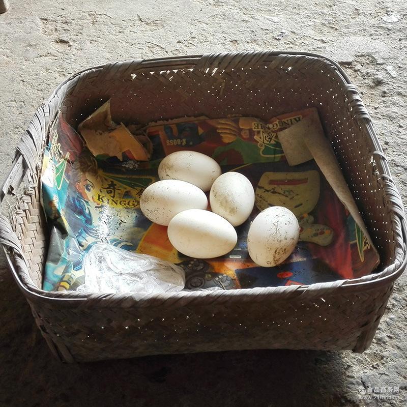 上海苏龙批发大量草鸡蛋土鸡蛋鸭蛋鹅蛋鸽蛋皮蛋咸鸭蛋鹌鹑蛋等