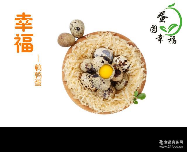 新鲜生鲜鹌鹑蛋 厂家出售大量原生态散装鹌鹑蛋生的 生态蛋 鲜蛋