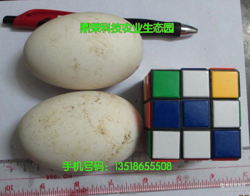 鹅蛋孵化率 鹅蛋孵化场 大量出售种鹅蛋