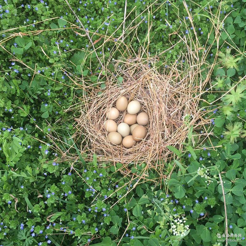 新鲜柴草鸡蛋笨鸡蛋 苏北30枚农家野外散养土鸡蛋