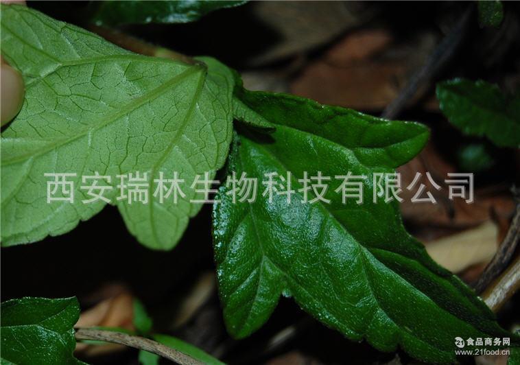 树叶粘贴画评分标准