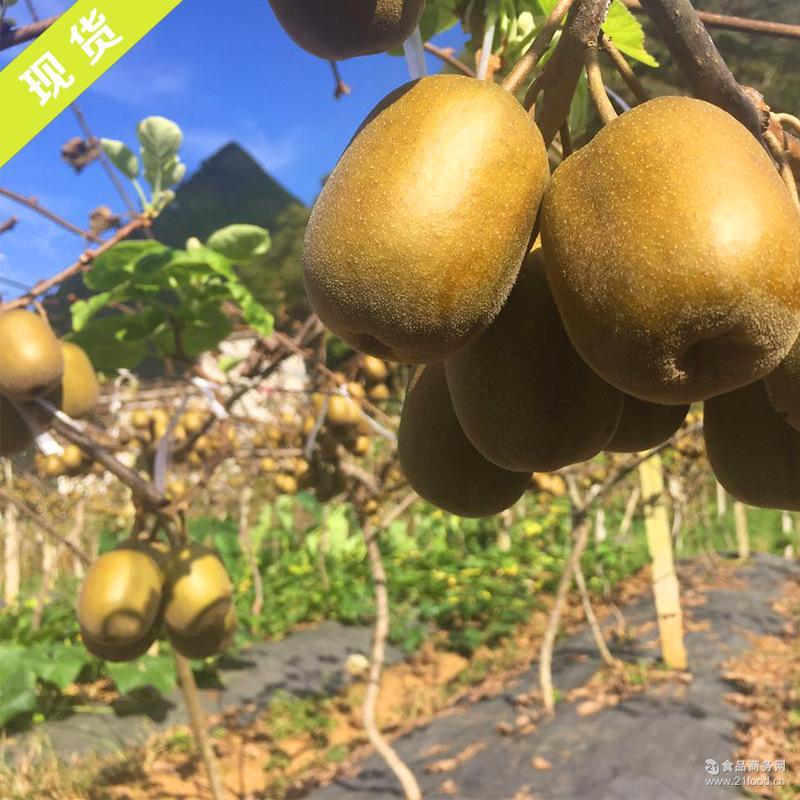 新鲜水果红心猕猴桃 奇异果量大从优直供 猕猴桃直销红心猕猴桃