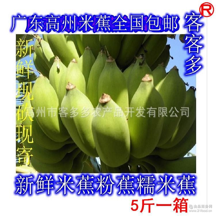 广东高州水果之乡现砍新鲜米蕉粉蕉糯米蕉香蕉无催熟剂包邮
