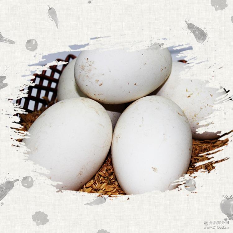 团购预定 无精卵 鹅蛋 【厂价供应】孵化场头照蛋