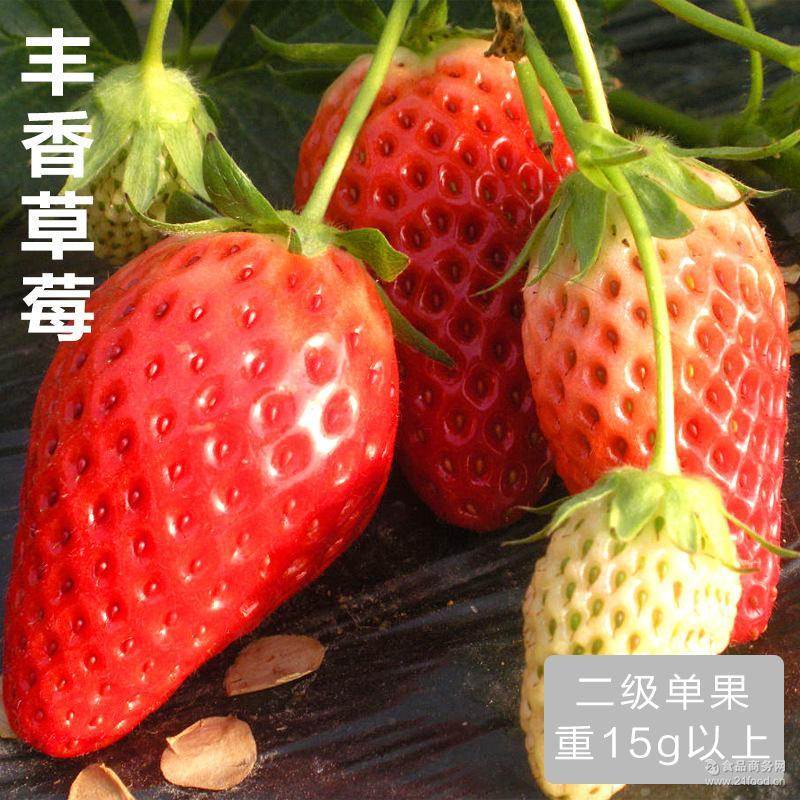 单果15g 四川基地直供水果丰香新鲜草莓现摘现发特价批发二级