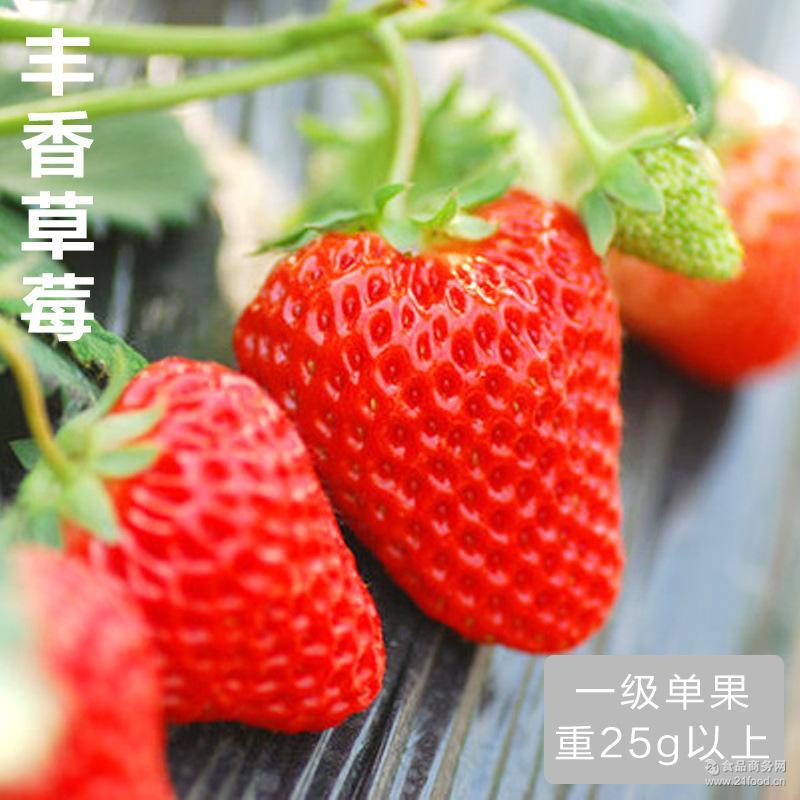 单果25g 四川基地直供水果 丰香新鲜草莓现摘现发特价批发一级